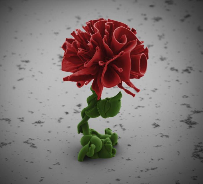 Nano Rose aus Bariumkarbonat-Silikat-Kristallkomplex (BaCO3-SiO2), dessen Wachstum gezielt von Forschern um Wim Noorduin von der Harvard University in Cambridge gesteuert wurde. © Wim Noorduin