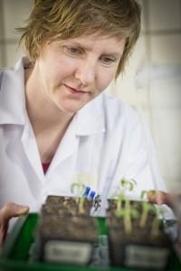 Ein bestimmtes Enzym ist der Schlüssel zur Ligninproduktion der Pflanzen. Foto: © Lunghammer - TU Graz