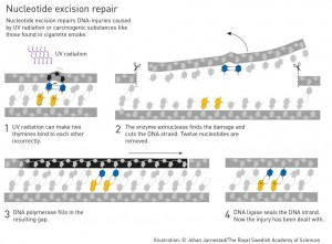 Aziz Sancar entdeckte den Mechanismus den Zellen verwenden, um DNA Schäden durch UV Strahlung zu reparieren.