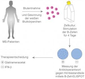 Der Bluttest kann die Therapie-Entscheidung bei Multipler Sklerose erleichtern. | Grafik: Michael Christof