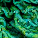 Diese Elektronenmikroskopaufnahme zeigt getrocknete Stücke heissen Silicons.   Foto: Maria Paula Rodriguez, Universidad de Los Andes