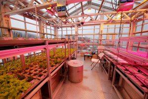 Ein Gewächshaus aus PLEXIGLAS® Alltop versorgt Wissenschaftler am Rande der Antarktis mit frischen Gurken, Tomaten & Co. | Foto: Evonik