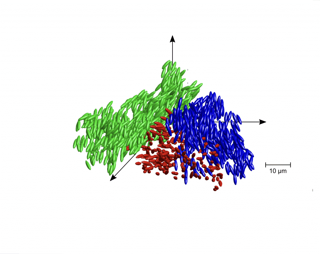 Darstellung der Position und Orientierung von Teilchen in Clustern eines flüssigen Glases. | Bild: AG Zumbusch und AG Fuchs