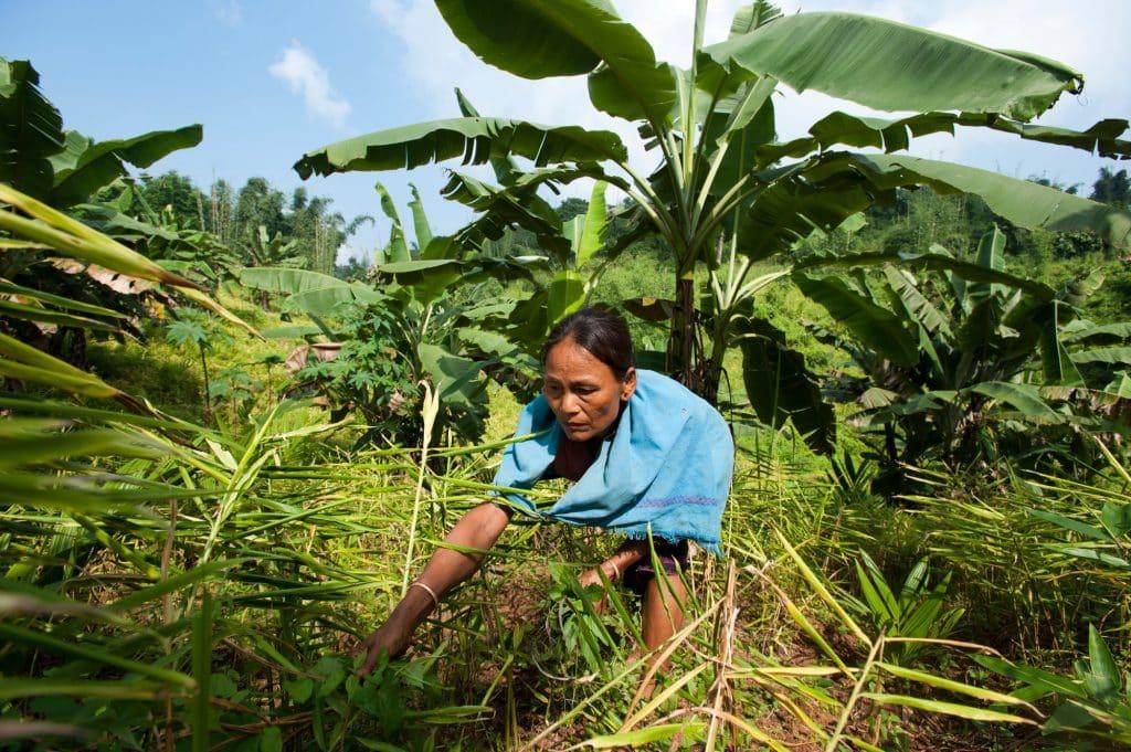Eine Kleinbäuerin in Indien bei der Ernte | Foto: Bayer